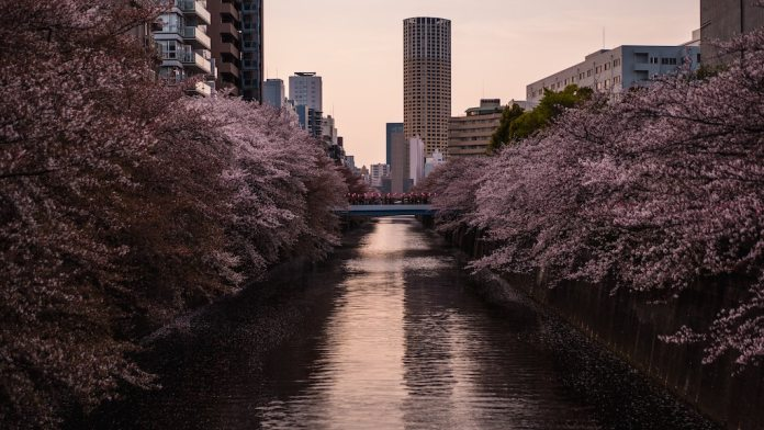 Tokyo 2020, the reforestation of urban trees