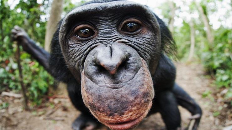 Un miliardo di dollari per salvare la foresta pluviale del