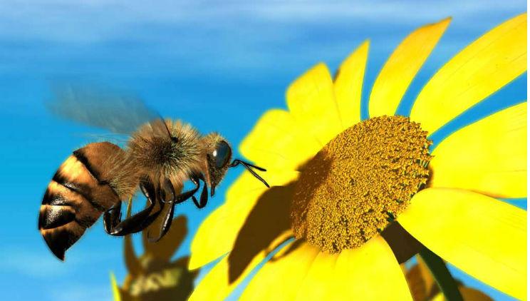 10 piante da coltivare per attirare le api e nutrirle