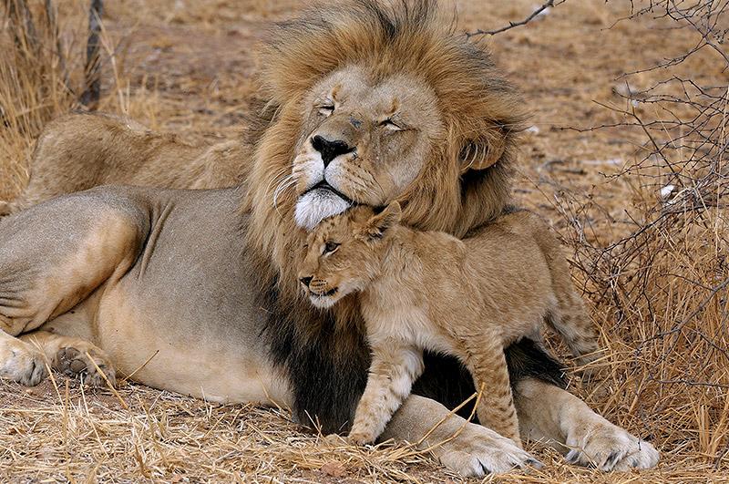Risultati immagini per papà animali