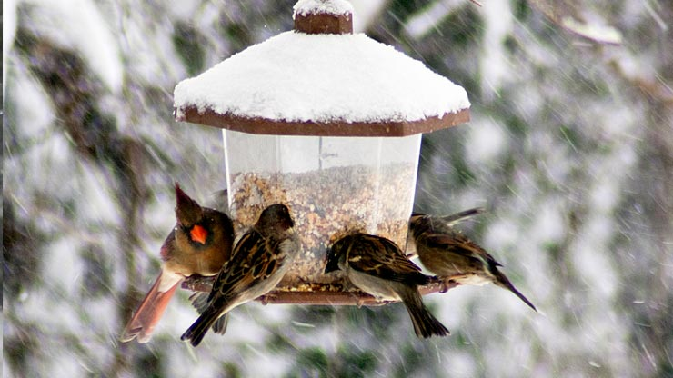 Uccellini Sos inverno  LifeGate