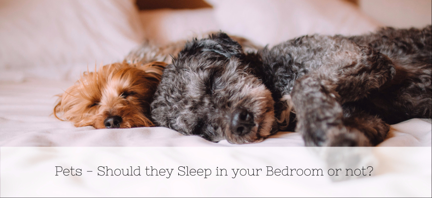 Pets - Should they Sleep in your Bedroom or not_