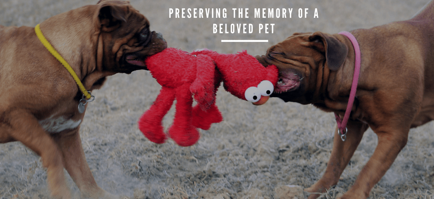 Preserving the Memory of a Beloved Pet