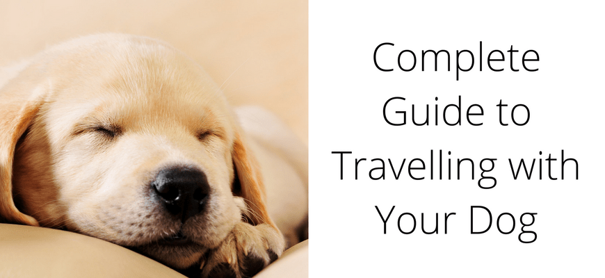 Complete Guide to Travelling with Your Dog