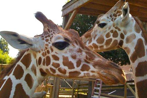 Richmond Metro Zoo Field Trip