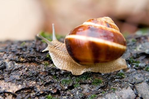 Snail in a Summer Garden