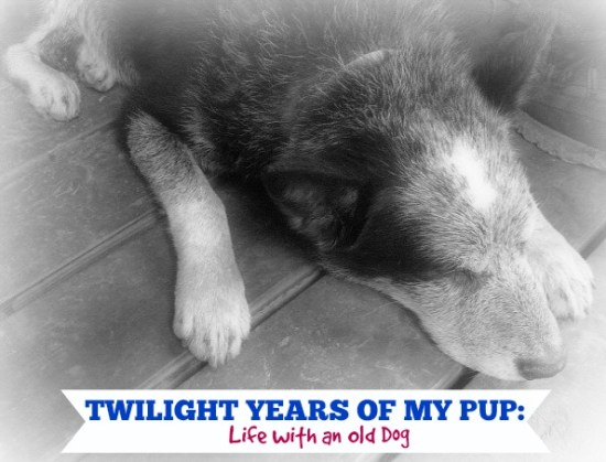 Twilight-Years-of-My-Pup-Life-With-an-Old-Dog