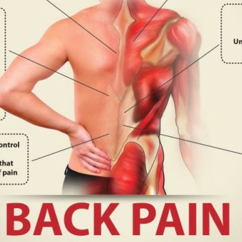 Why Do So Many of Us Have Back Pain?