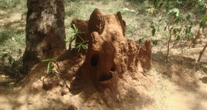 Prevent Termite Damage to Your Home