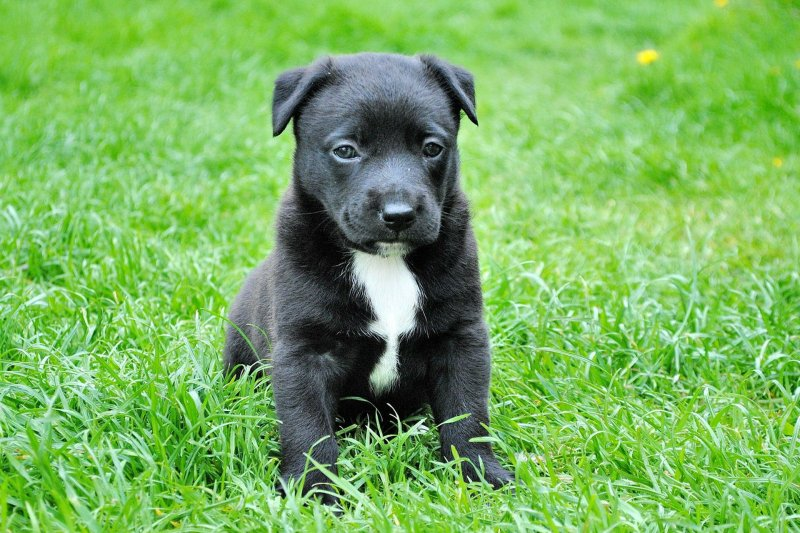 7 Tips to Potty Train Puppies