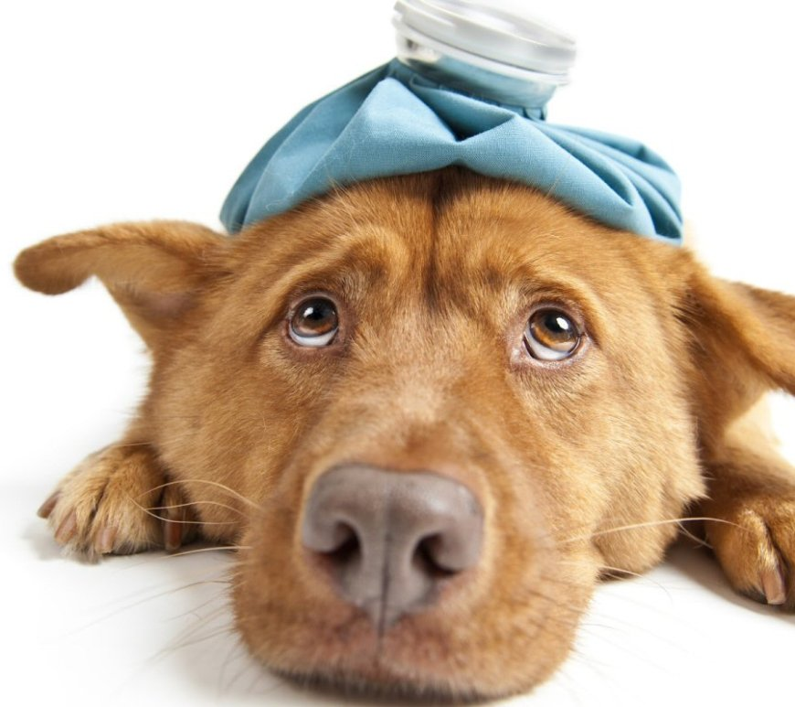 Pets At Home - How To Understand The Health Warning Signs