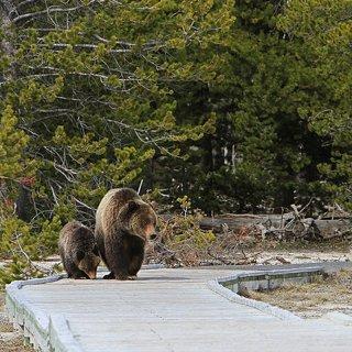 5 Wildlife Adventures in the US