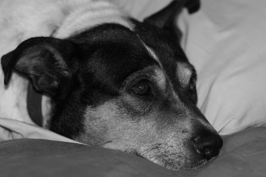 sad doggy misses his family