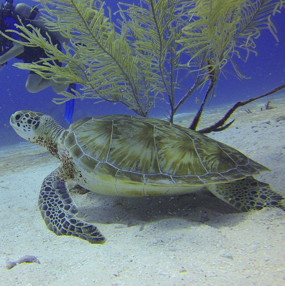 Sea Turtles, Mexico