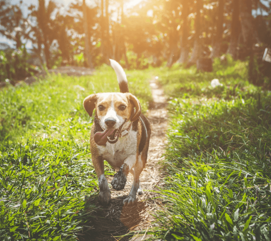 Ensure Life with Your New Dog Isn't a Slog
