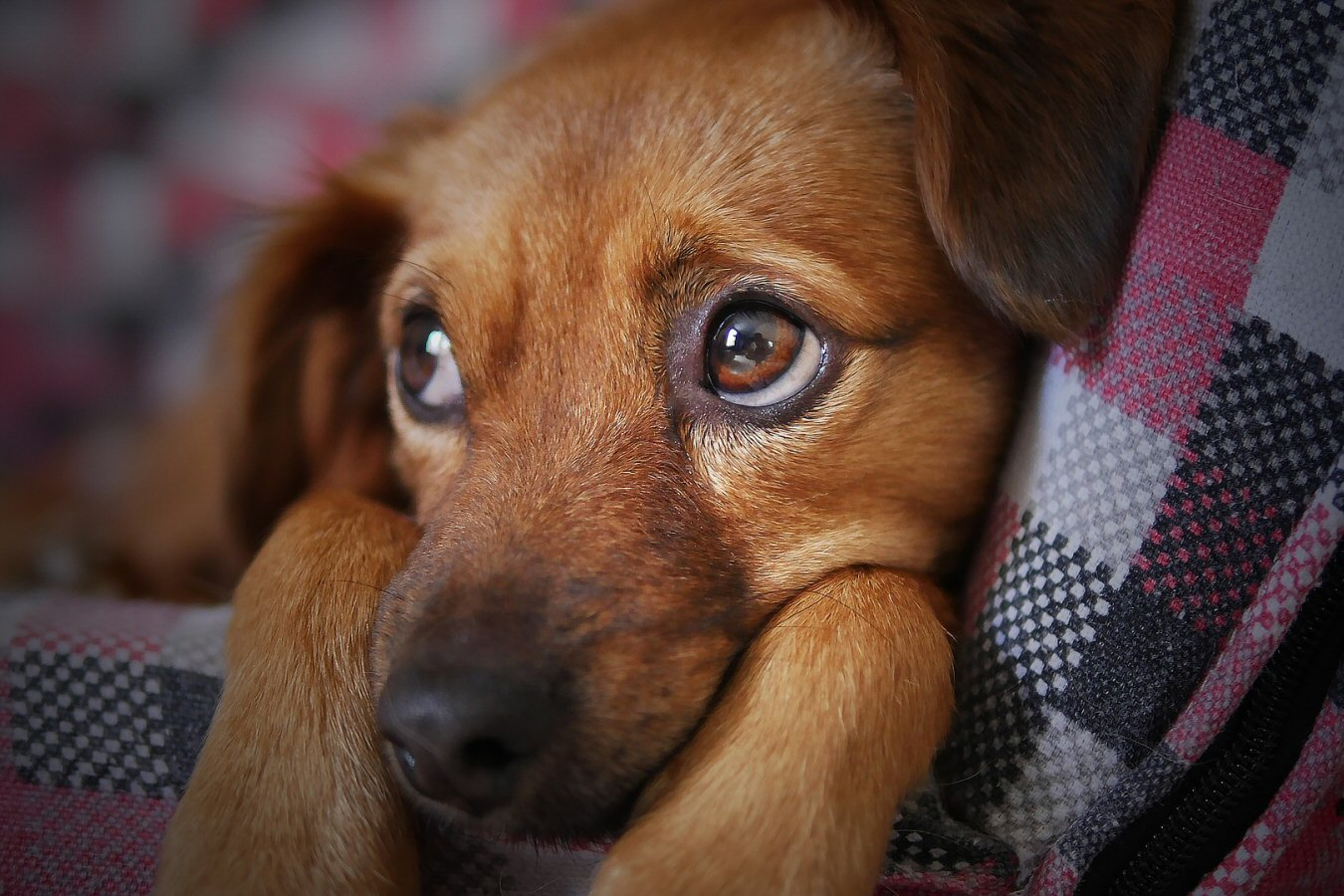 3 Things A Dog Will Teach You About Life