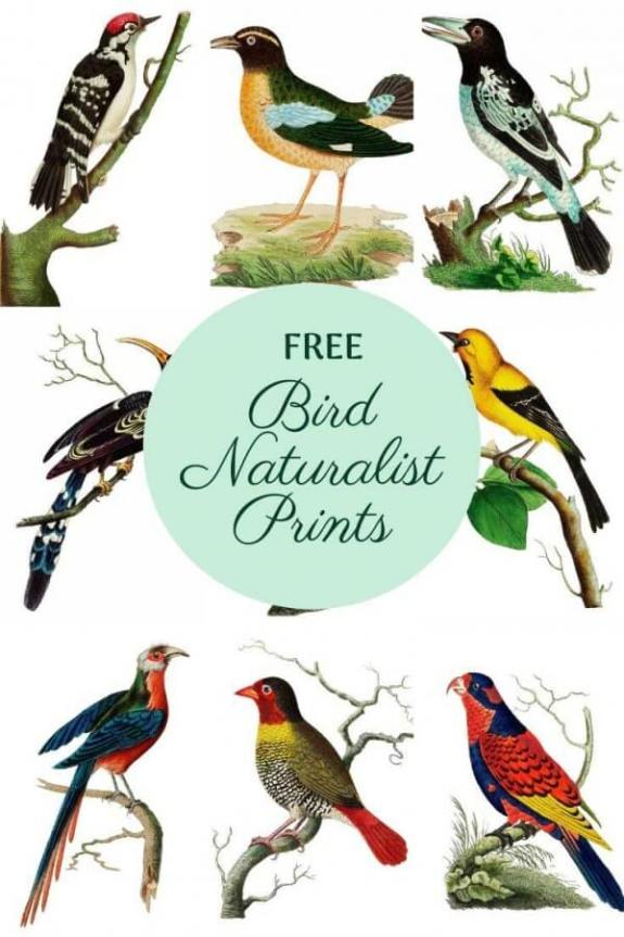 Week 251 Vintage Bird Prints from Picture Box Blue
