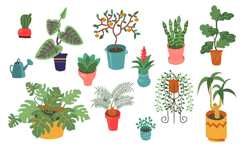 best plants for your home