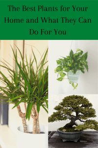 the best plants for your home