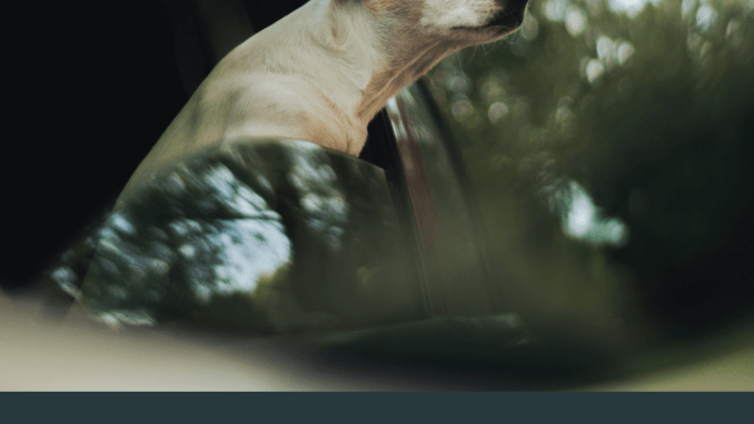Time For A Road Trip - Bring The Dog With These Tips!