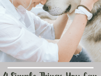 4 Simple Things To Make Sure Your Dog Is Happy and Healthy