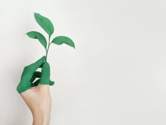 eco-friendly hand and plant