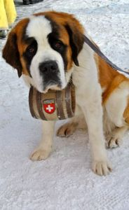 dog switzerland