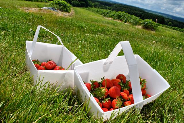 brockbushes stawberries