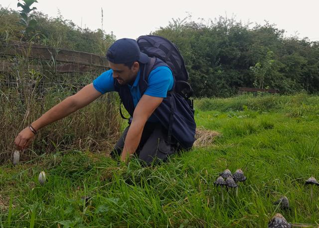 david nature north east, foraging