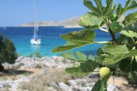 Italian Fruit Trees