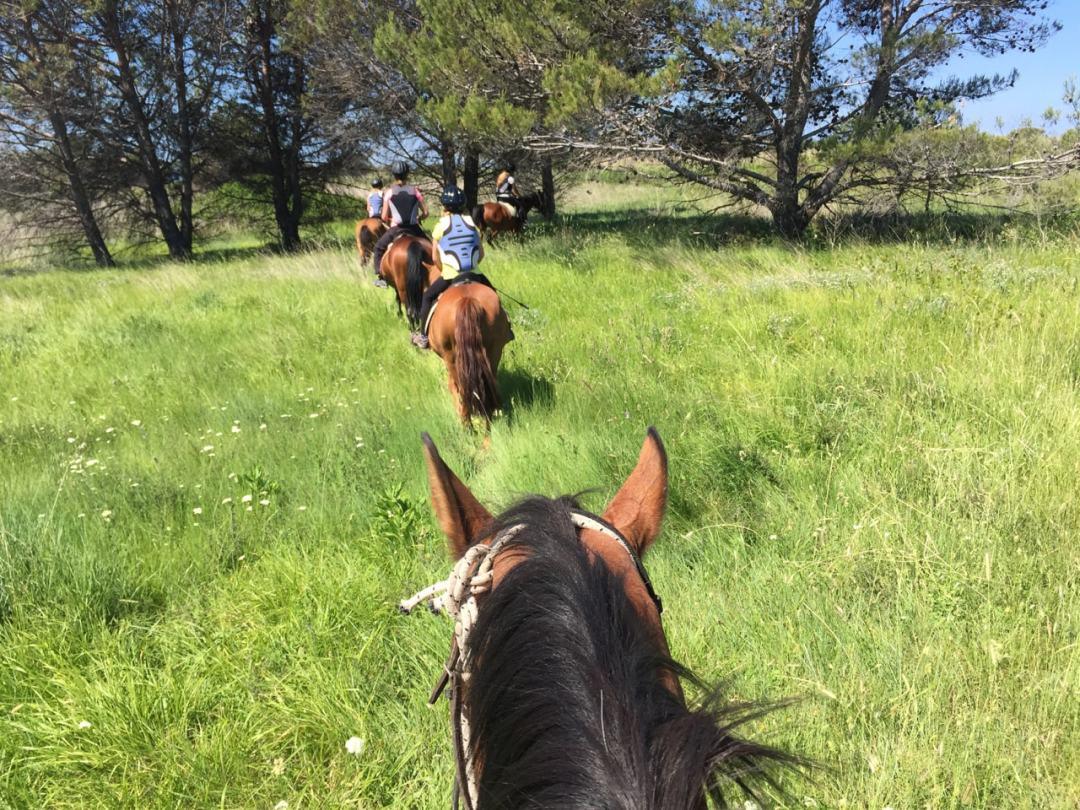 Leg 11 Croatia Zaton Horse Riding - 1 (44)-min