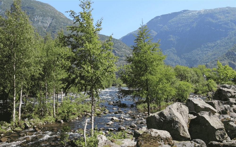 Camping Sæbo9-opt