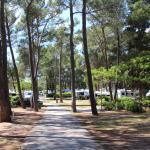 Campsite Review   Zaton Holiday Resort    Zadar   Croatia
