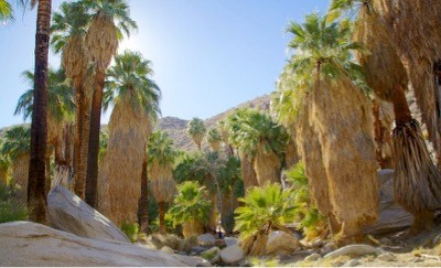 Make Palm Springs Your Next Family Destination