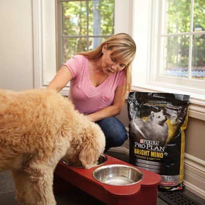Keeping Your Senior Dog Healthy With Purina Pro Plan Bright Mind