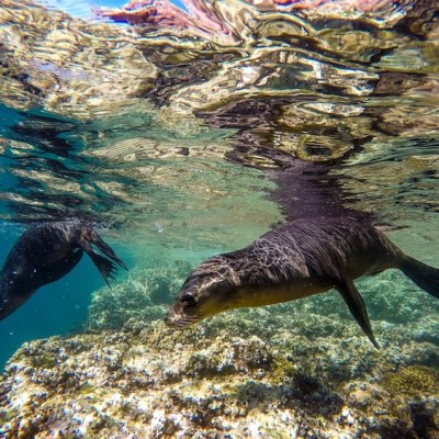 The Best Adventure Excursions in Cabo Are Found with Cabo Adventures