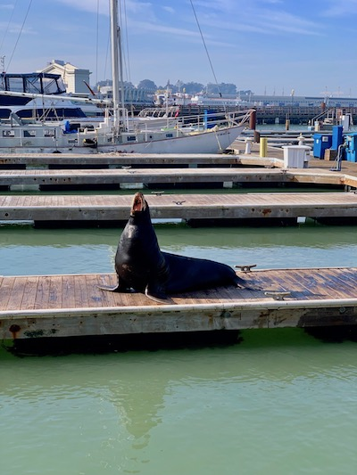 stuck in San Francisco, what to do, what to see, sea lions, Pier 39