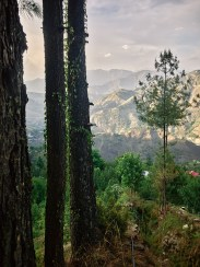 Trees with mountains from Thali Village of Jubbal