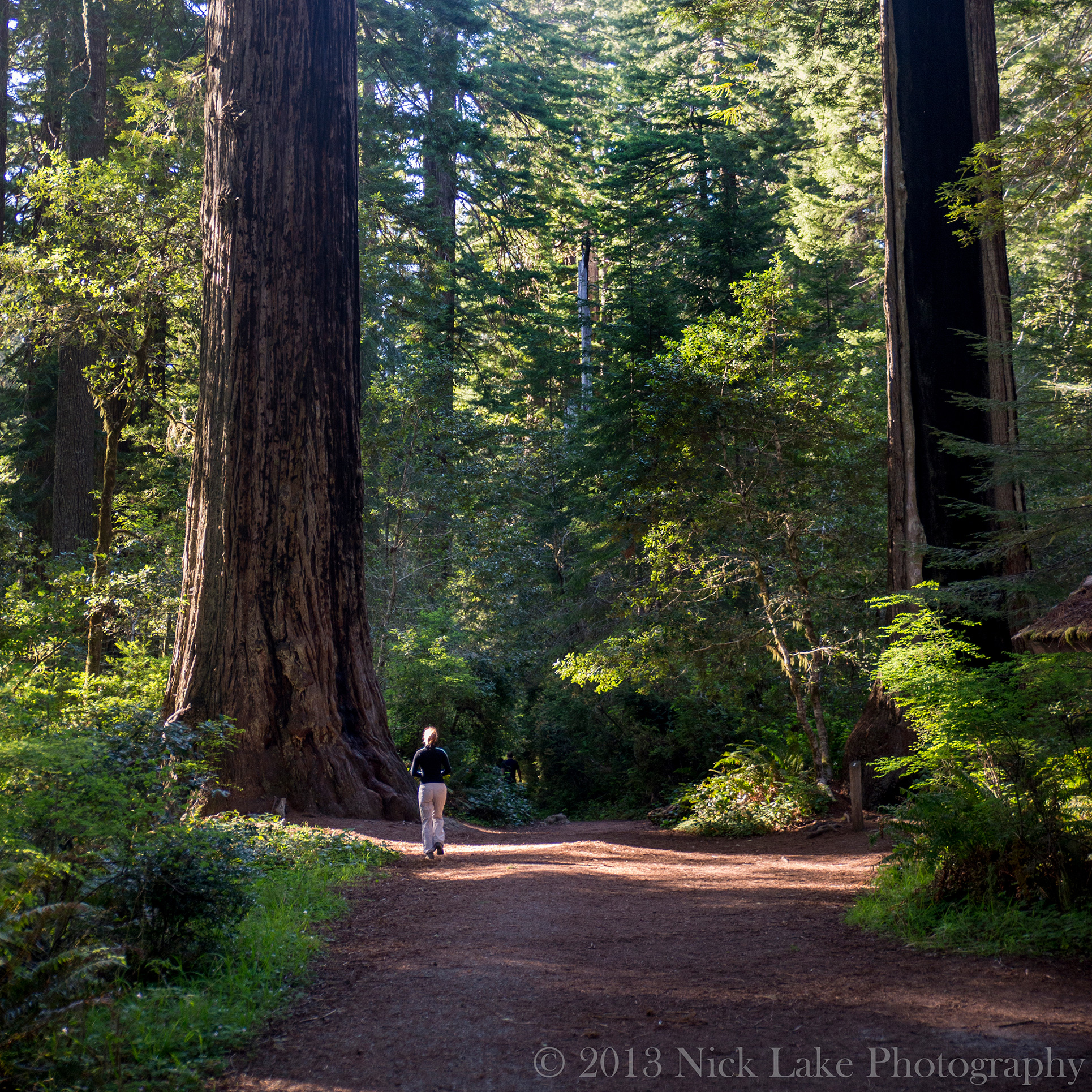 Kelly admires a large Redwood in the Lady Bird Johnson Grove