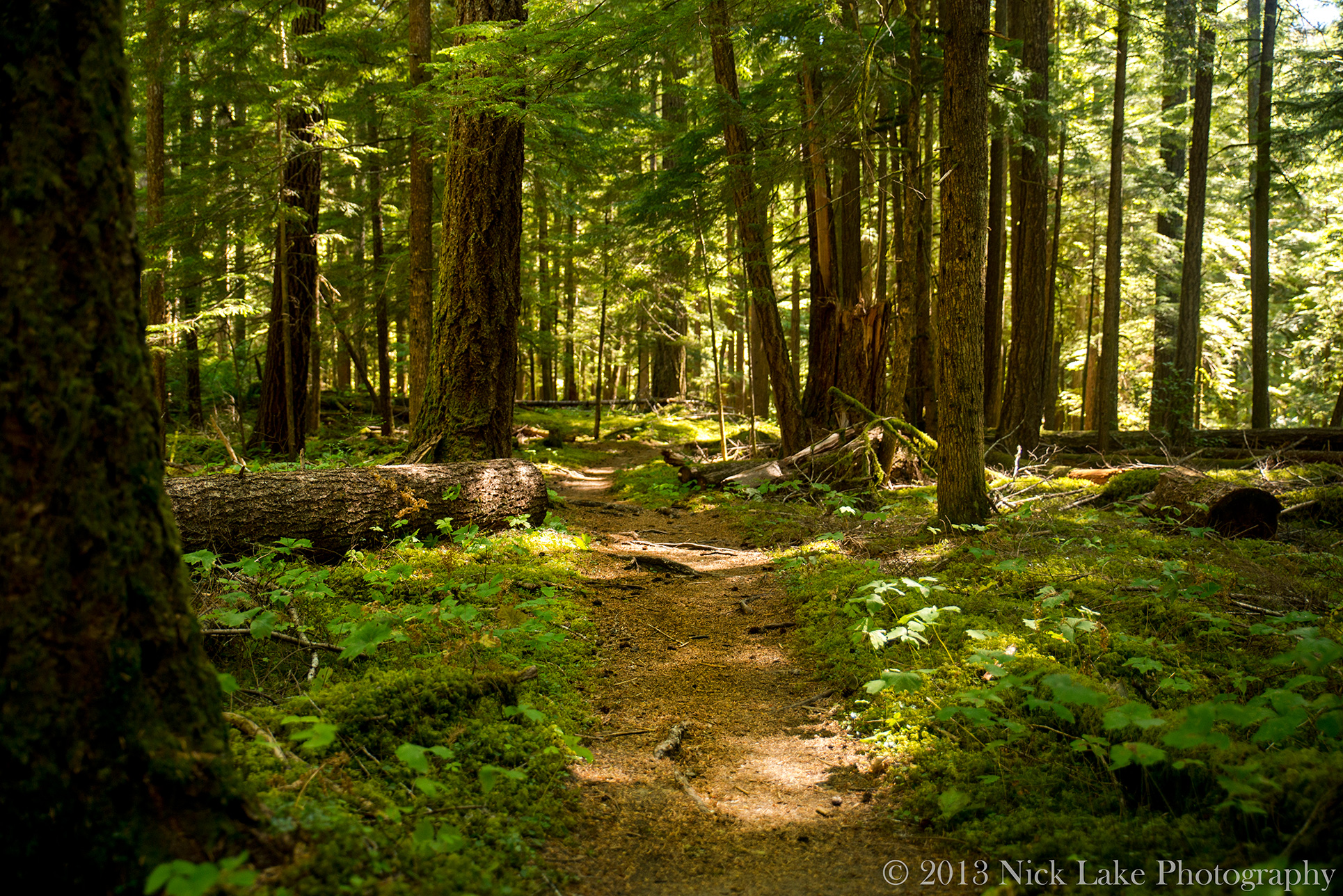 Trail Winds through Green Forest in Olympic National Park