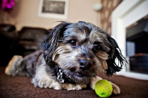 6-Truths-About-And-Tips-For-Working-From-Home-When-You're-A-Dog-Owner-2