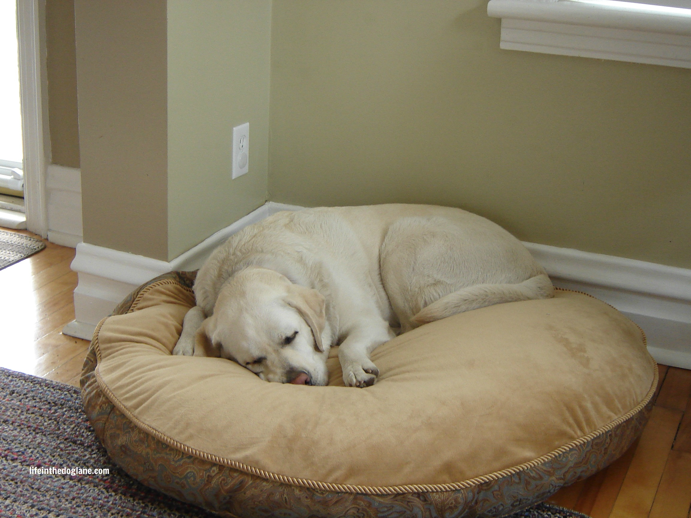 Choosing A Dog Bed