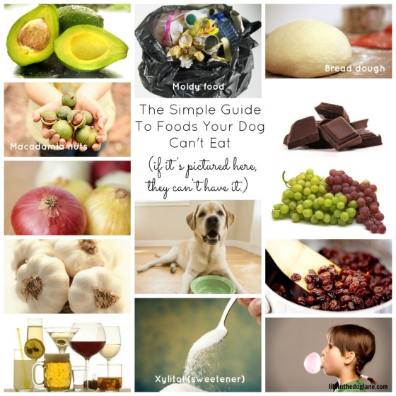 The Simple Guide To Foods Your Dog Can't Eat
