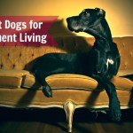 The 10 Best Dogs For Apartment Living