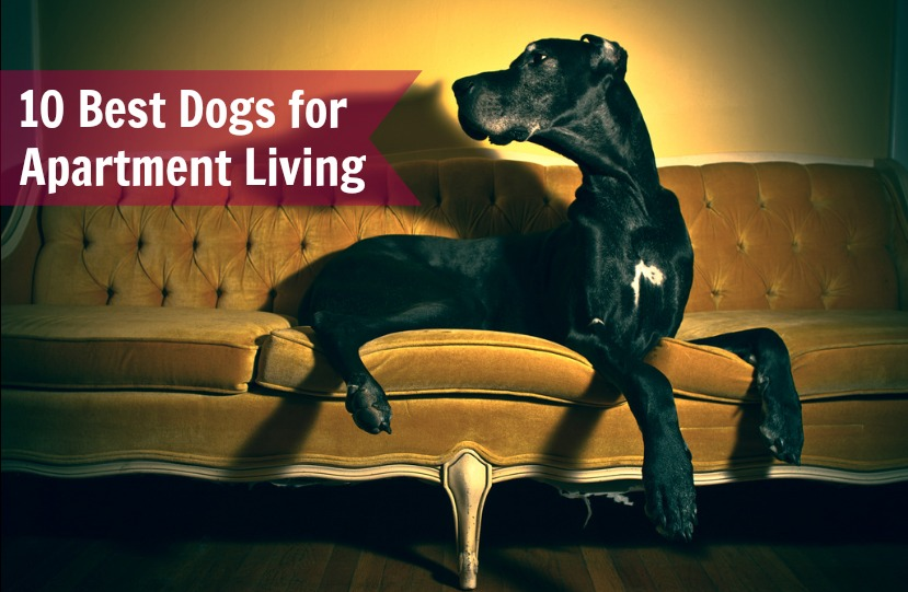 10 Best Dogs for Apartment Living