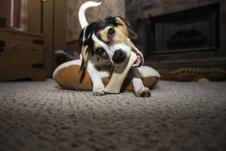 What To Do When Your Dog Gets Something Caught In Its Throat