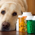 Dog-Sitting: What To Ask and What To Know – Topic #2: Medications