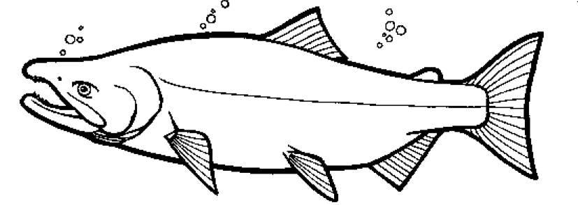 Color the Chum Salmon