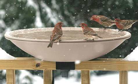 Birds Drinking Water Sip By Sip