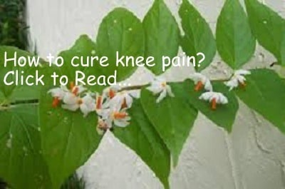 Arthritis Home Remedies To Get Sure Relief Life In Vedas